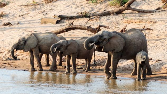 Kenia, Parque Nacional Samburu © Miguel Sanz / Getty Images