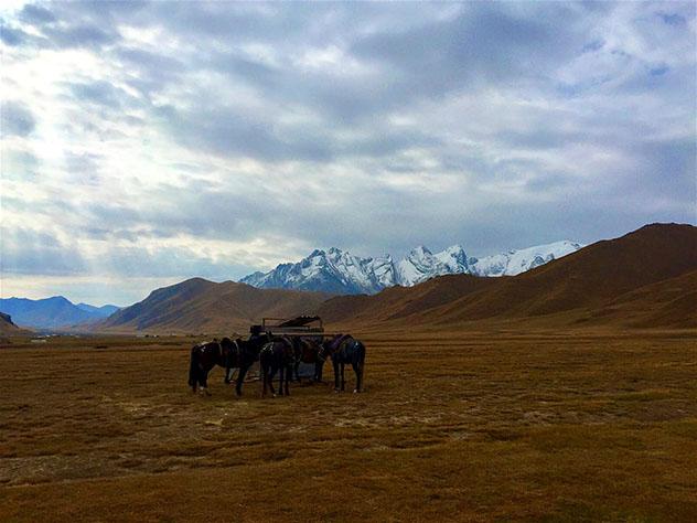 Los caballos, ensillados y listos para una excursión matinal; Kirguistán © Lonely Planet / Megan Eaves