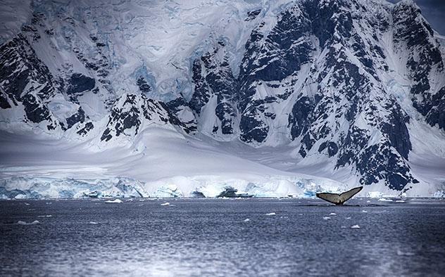 El peor viaje del mundo, libro para viajar a la Antártida