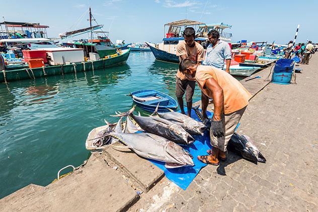 Mercado de pescado en Malé, Maldivas © byvalet / Shutterstock