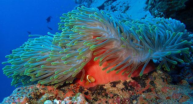 Mundo submarino de Maldivas © Mara Feodor / Shutterstock