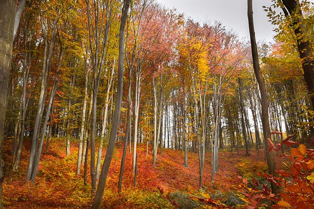 Paisaje de Codrii, Moldavia © Ungureanu Alex-Mihail / Shutterstock