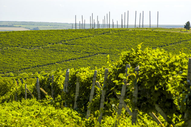 Viñedos de Cricova, Moldavia © visualpower / Shutterstock