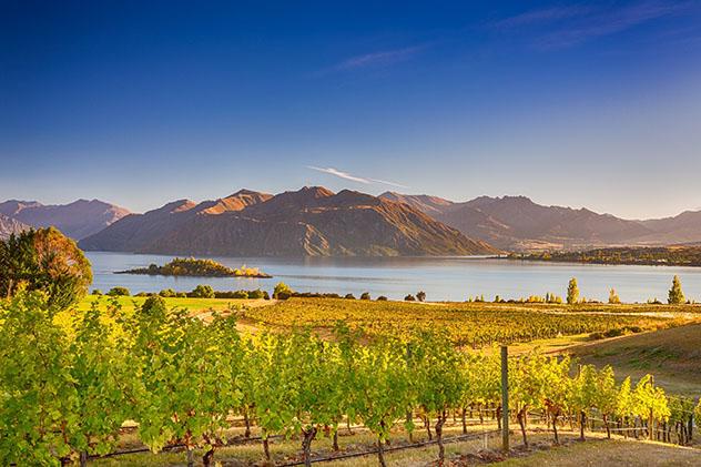 Un viñedo con vistas al lago Wanaka en la Isla Sur de Nueva Zelanda © Karel Cerny / Shutterstock