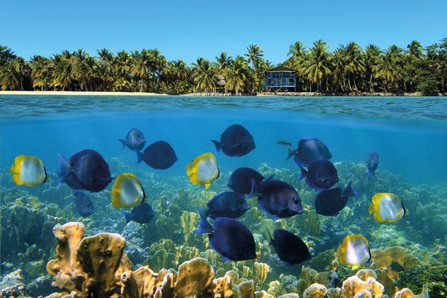 Coloridos arrecifes de coral en Bocas del Toro, en la costa caribeña de Panamá © Vilainecrevette / Shutterstock