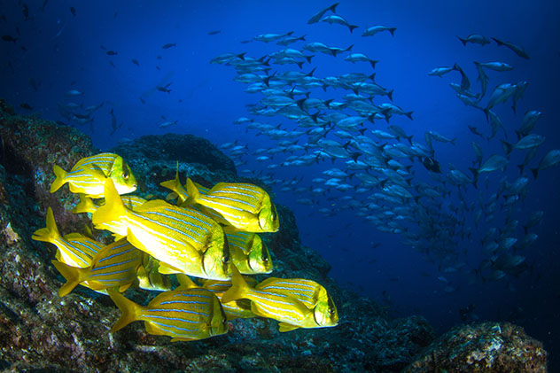 Fauna Panamá: peces tropicales