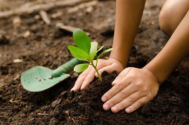 Plantar un árbol en el alojamiento ecológico, Artic Blue Resort, Finlandia. Viaje sostenible Lonely Planet