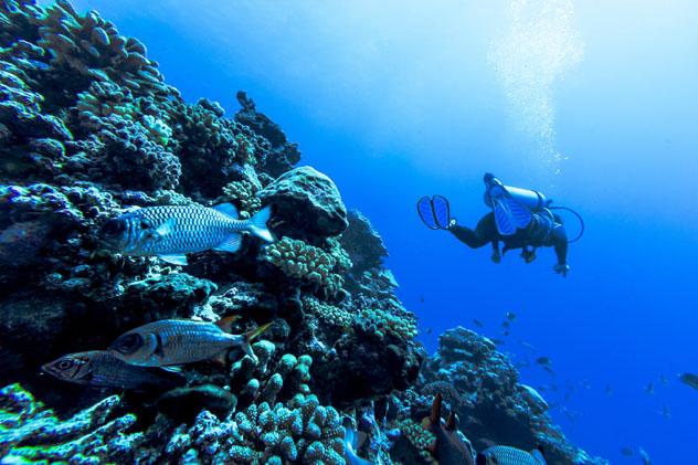 Submarinismo en Rangiroa, Polinesia Francesa © MaFelipe / Getty Images