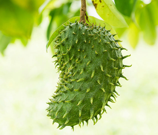 Santo Tomé y Príncipe: fruta verde del 'sape-sape'
