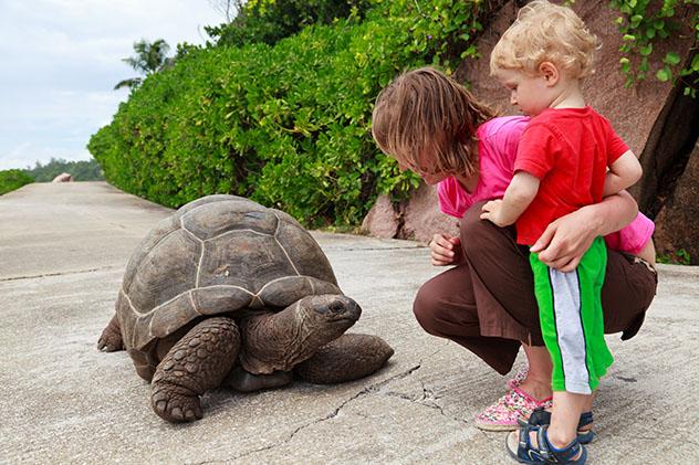 Tortuga gigante y familia, Seychelles © NadyaEugene / Shutterstock