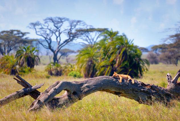 Un circuito en grupo reducido puede reducir el estrés de un viaje a África Oriental © Yury Birukov / Shutterstock