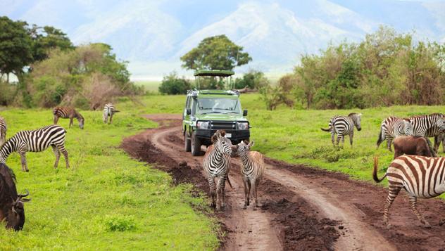 Safari en Tanzania © BlueOrange Studio / Shutterstock