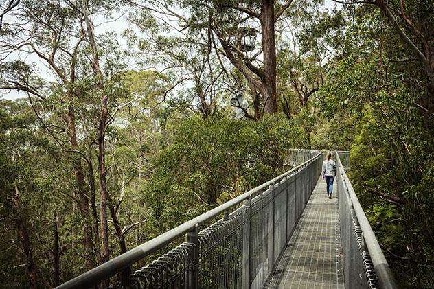 Turismo sostenible: comunidad. Ruta por el dosel arbóreo en Illawarra Fly