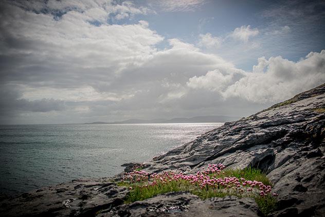 Turismo sostenible: comunidad. Flores en la costa, Burren, Irlanda