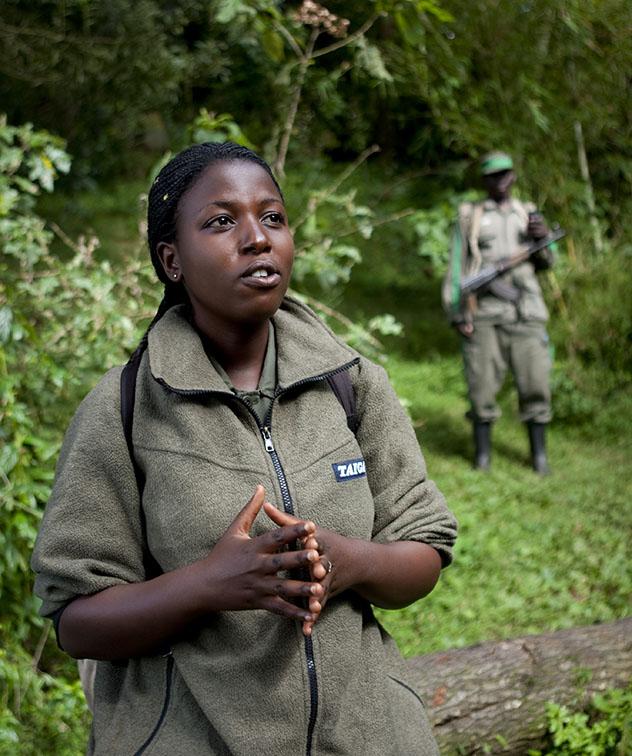 Turismo sostenible. Sostenibilidad. Una guía en expedición de avistamiento de gorilas en el Parque Nacional de los Volcanes, Ruanda