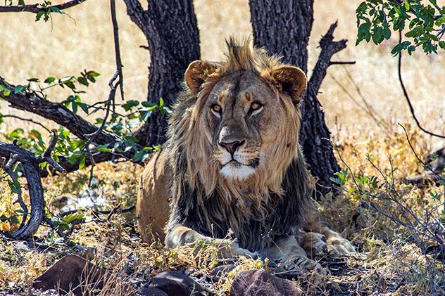 Turismo sostenible: sostenibilidad. Grootberg Lodge organiza safaris fotográficos, Namibia