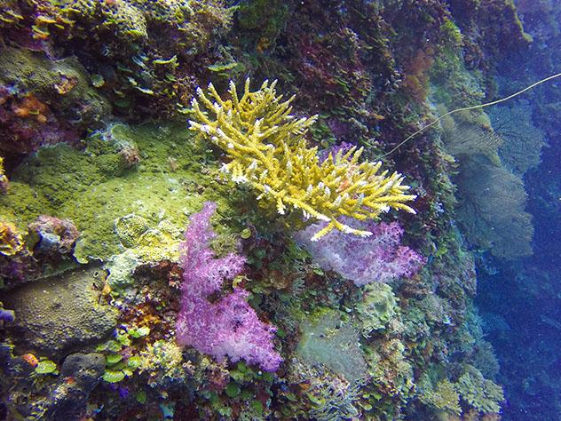 Turismo sostenible: sostenibilidad. Arrecifes de coral cerca de Palaos