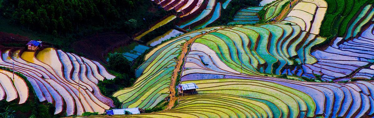 Campos de arroz en Vietnam. Viaje sostenible Lonely Planet