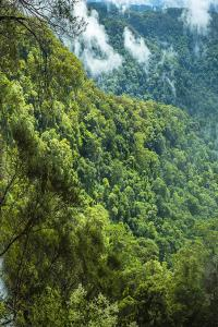 Goomoolahra falls, Springbrook National Park