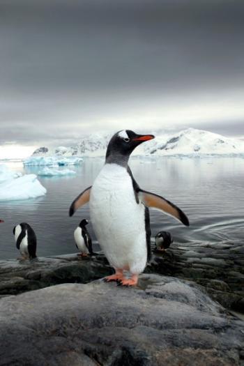 Guías de Antártida