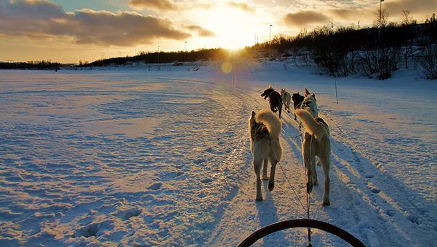 En trineo de perros por el ártico de Noruega
