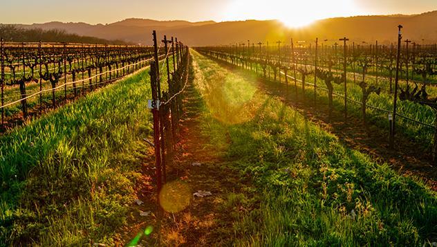 Napa Valley, California, Estados Unidos
