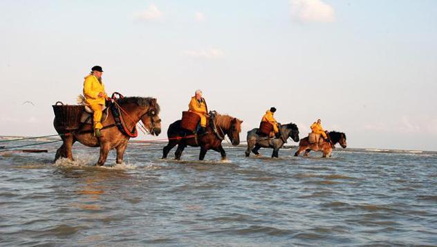 'Paardenvissers', Oostduinkerke, Bélgica © www.koksijde.be