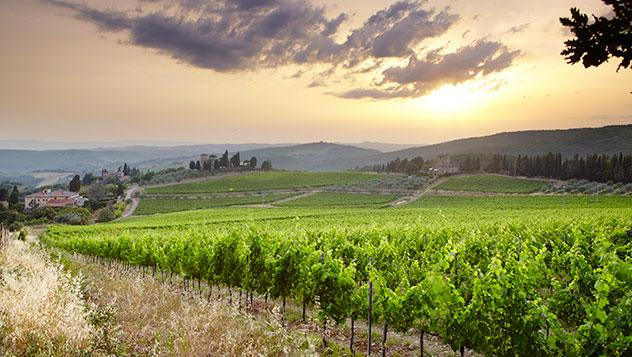 Colinas cubiertas de viñedos en Chianti, la Toscana, Italia