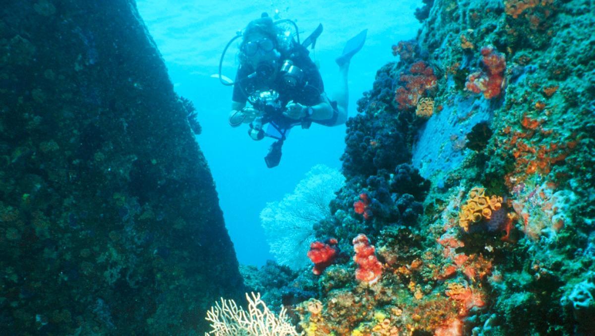 Submarinismo en la isla de Mahé, Seychelles
