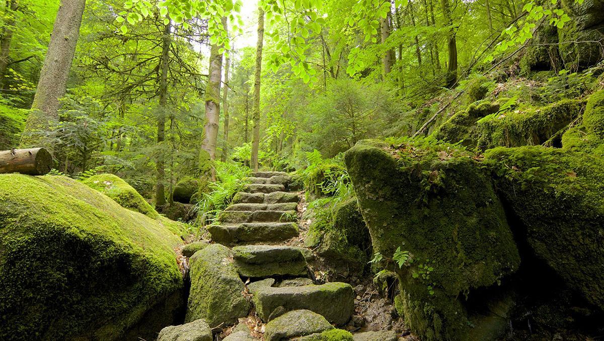 Selva Negra de Alemania, ruta por Gertelbach