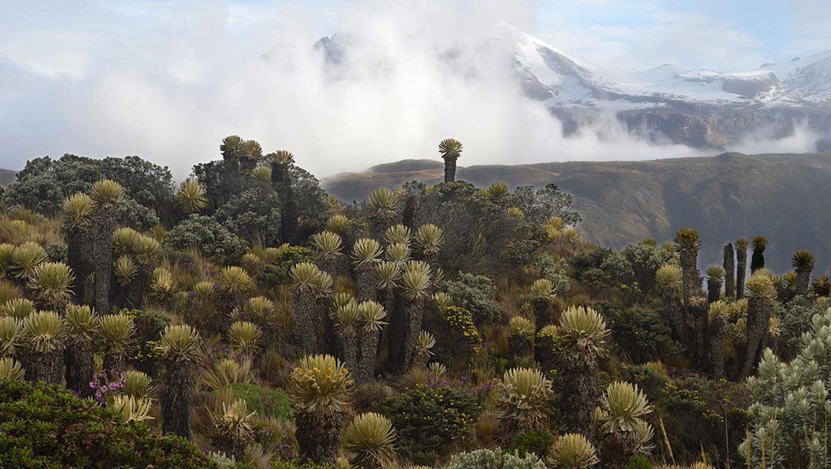 PNN Los Nevados, Colombia