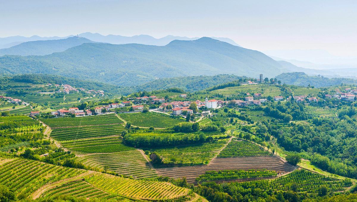 Región vinícola de Eslovenia
