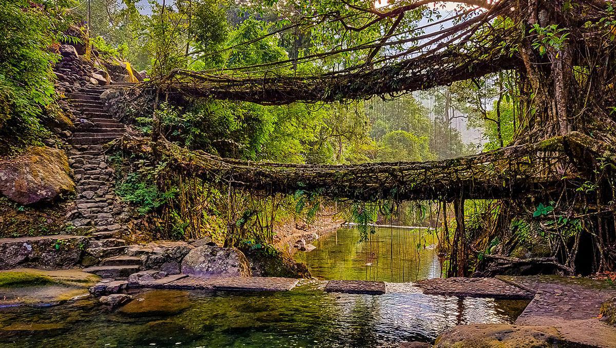Puentes vivientes de Meghalaya, India