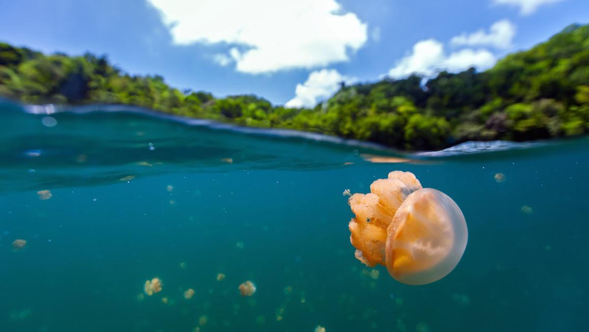 El lago de las Medusas, Palaos