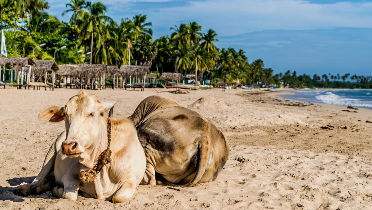 Playa de Uppuveli, Sri Lanka