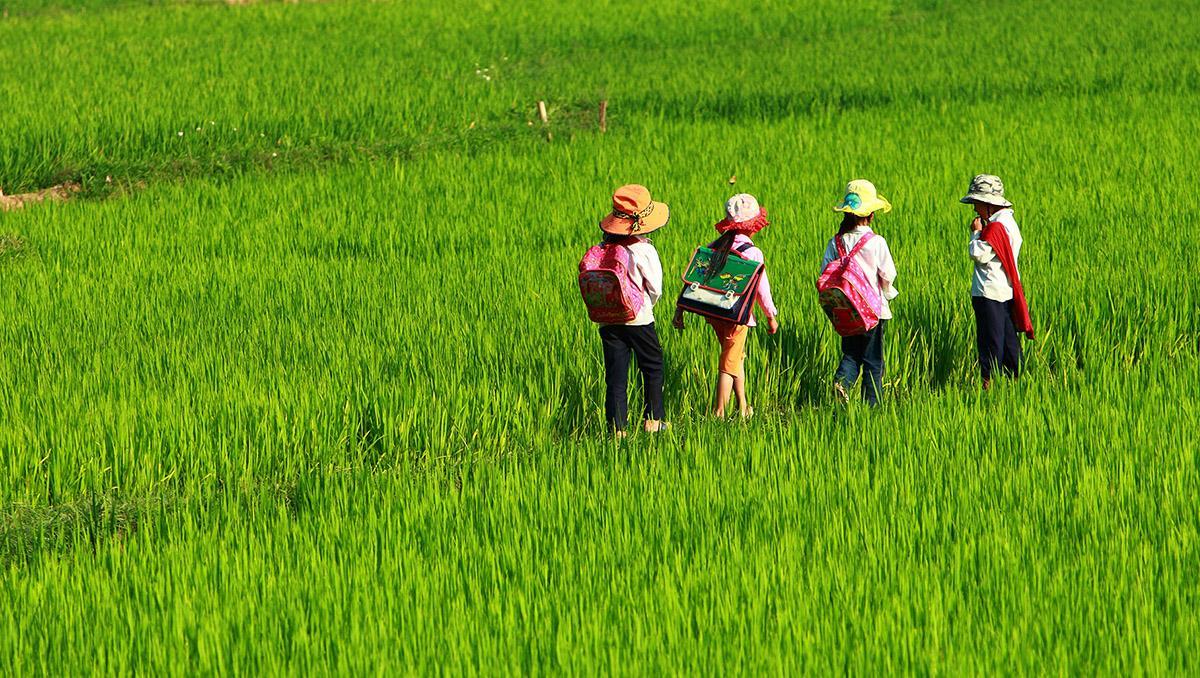 Niños cruzando arrozales en Vietnam