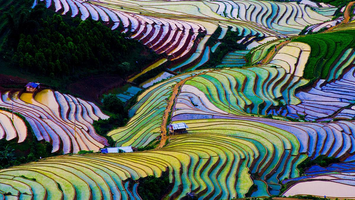 Campos de arroz en Vietnam. Viaje sostenible Lonely Planet