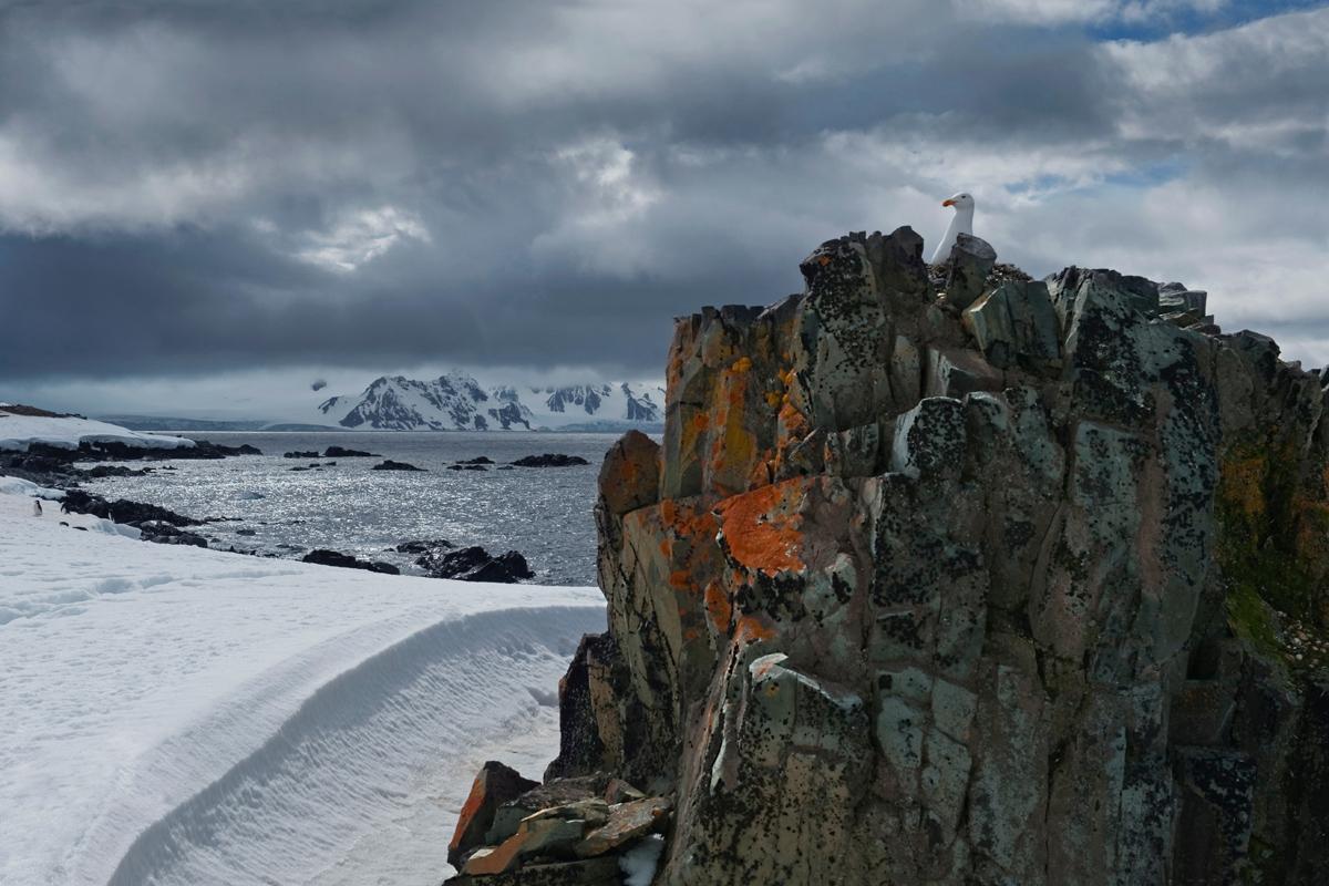 Isla Half Moon, Antártida