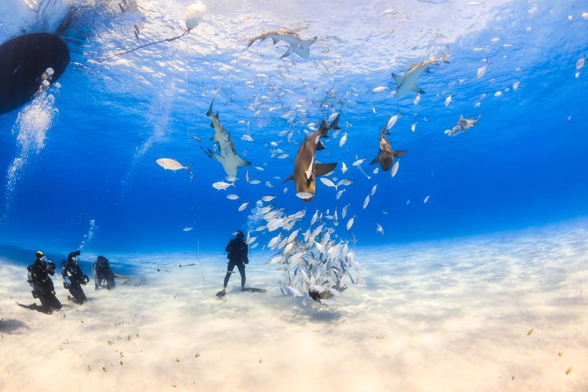 Isla Tigre, Bahamas