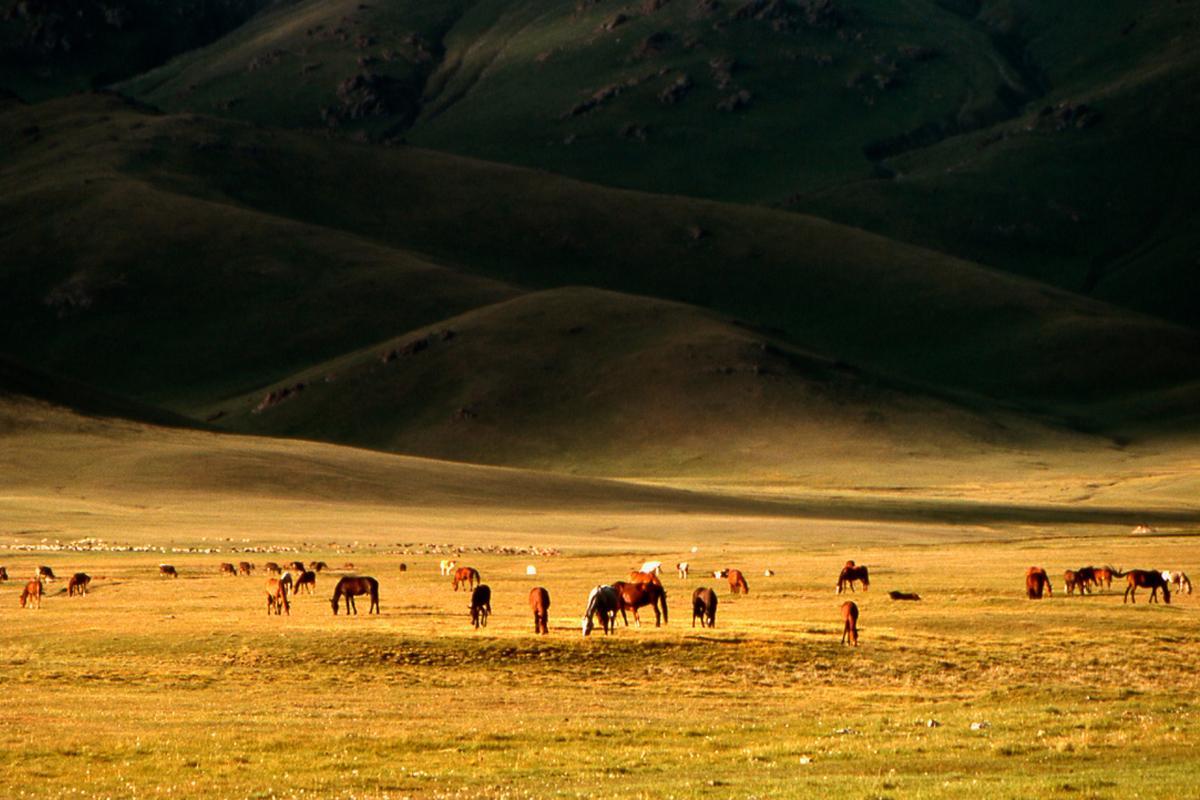 Estepa cerca del Lago Song-Kul, Kirguuistán
