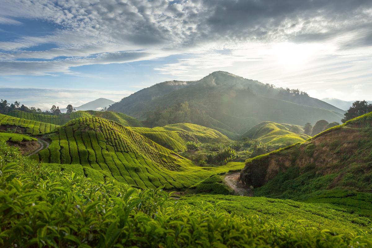 Cameron Highland, Malasia