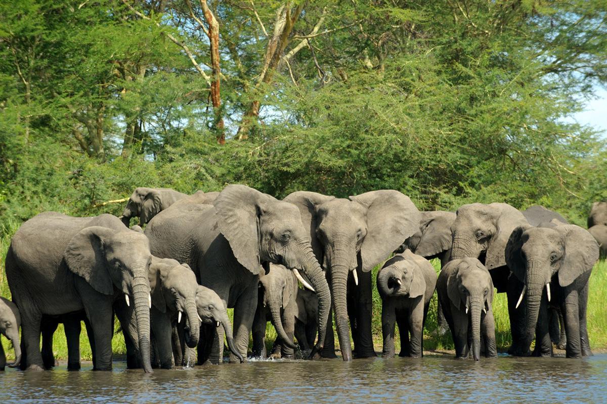 Parque Nacional Livonde, Malaui