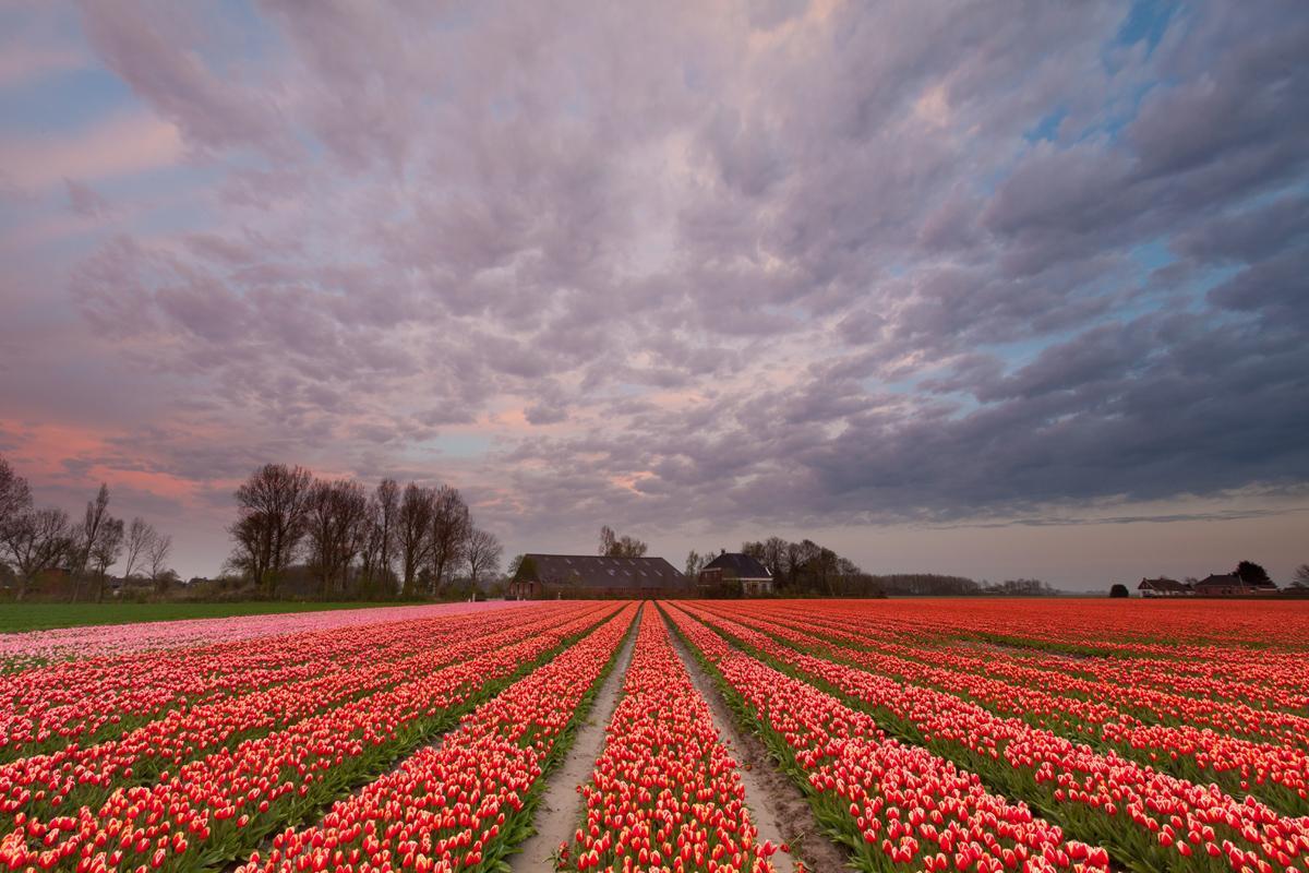 Zijldijk, Países Bajos