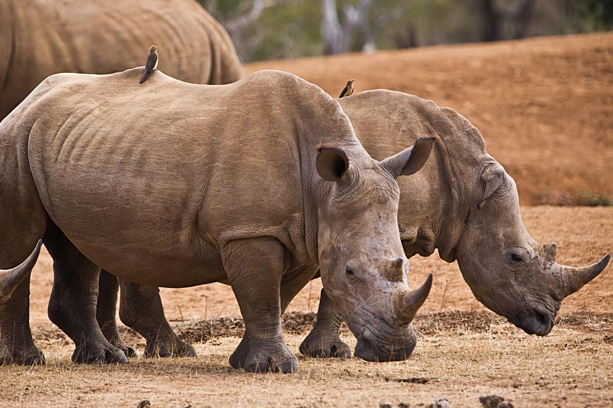 Parque Nacional Hlane Royal, Esuatini (Suazilandia)