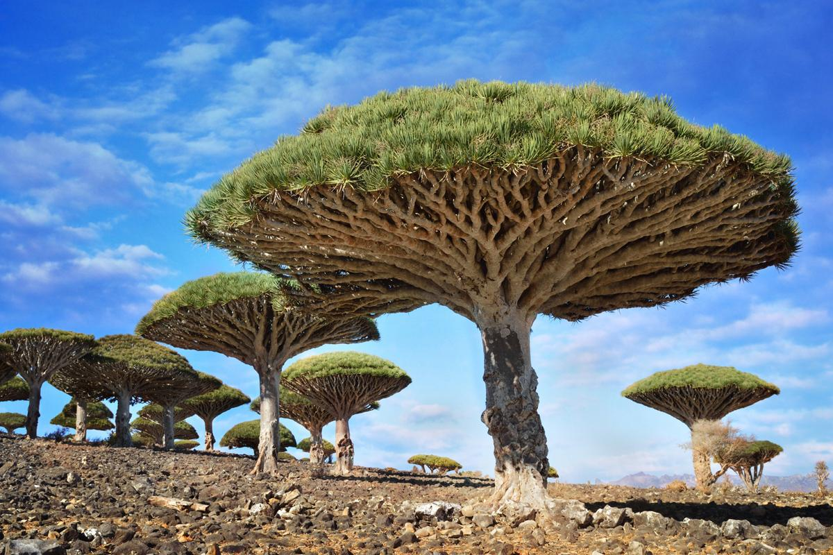 Suqutra, Yemen