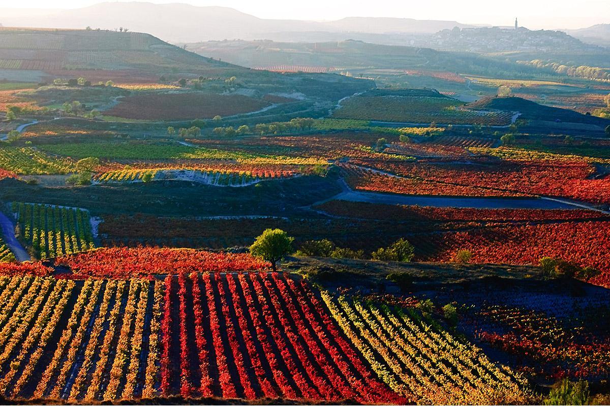 Viñedos de La Rioja, España