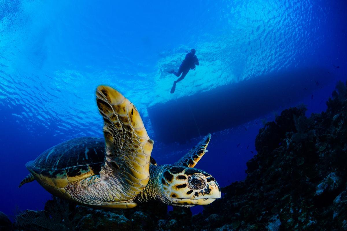 viajar a Islas Caimán