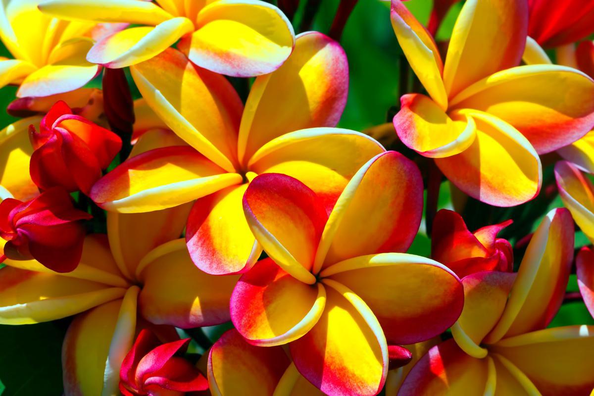 viajar a Islas Marianas del Norte