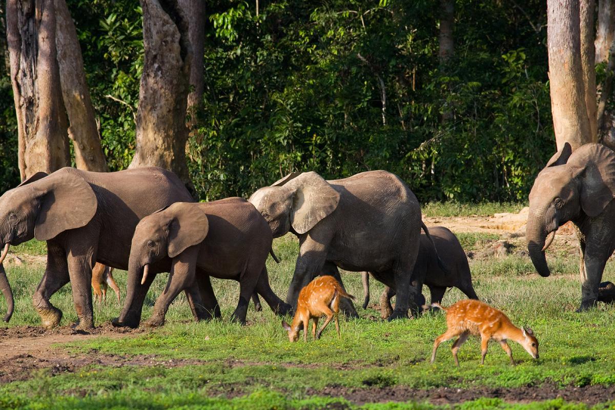 viajar a República Centroafricana