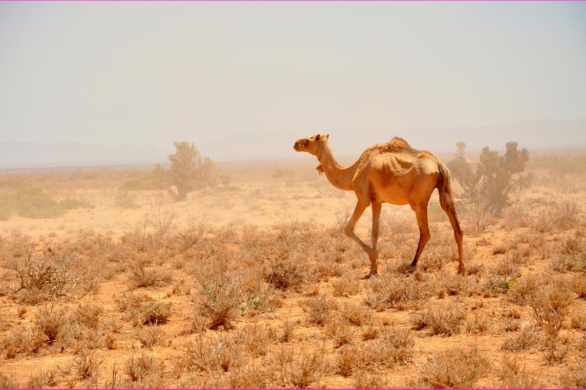 viajar a Somalia y Somalilandia